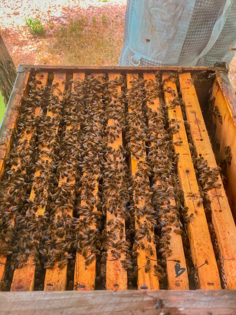 Le api e il loro mondo _l'alveare